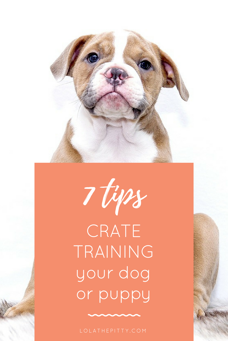 7 Tips for Crating your dog or puppy! www.lolathepitty.com
