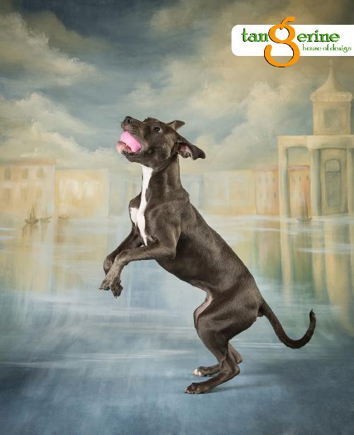 Lillie - adoptable dog of the week - www.lolathepitty.com