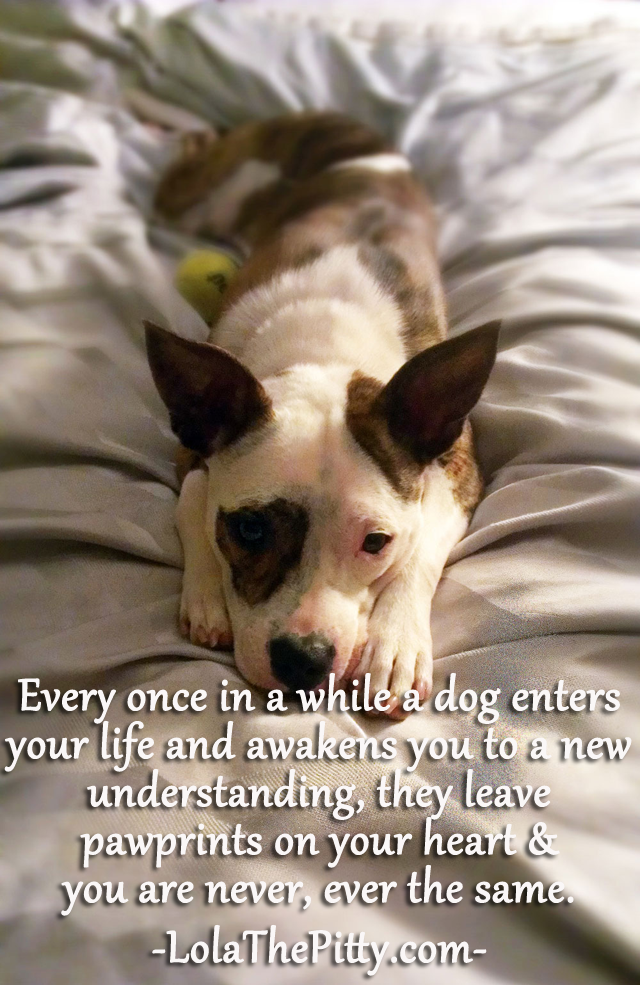 Every once in a while a dog enters your life...www.lolathepitty.com