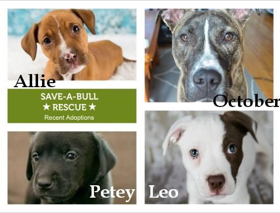 Rio Puppy - lolathepitty.com