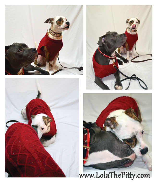 Christmas photo bloopers - @lolathepitty