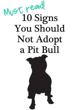 10 Signs You Should Not Adopt a Pit Bull