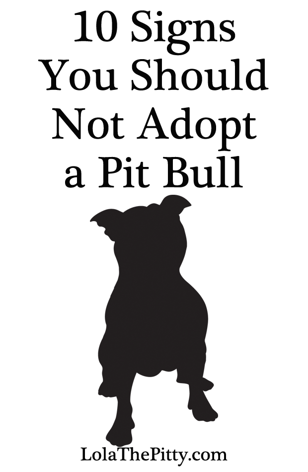 10 Signs You Shouldn't Adopt a Pit Bull - www.lolathepitty.com