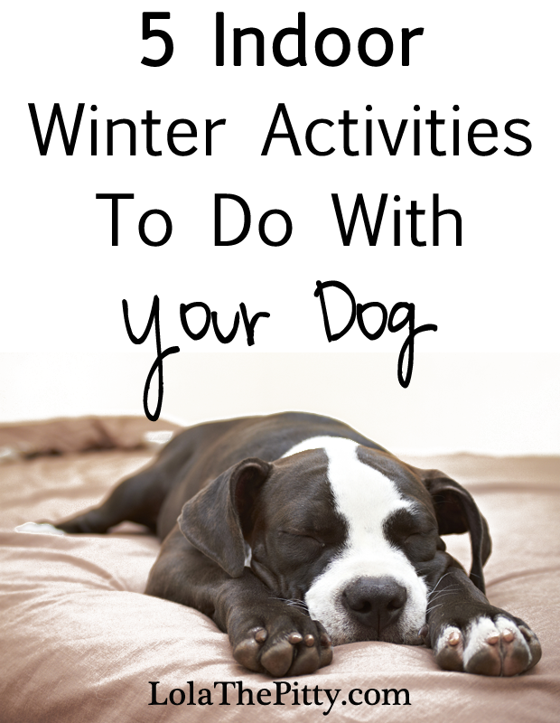 5 Indoor Activities to do with your dog! www.lolathepitty.com