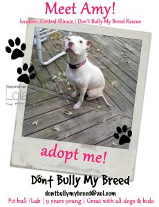 Amy - Adoptable Dog of the Week - location: Illinois