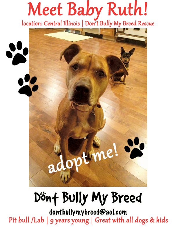 Baby Ruth - Adoptable Dog of the Week in Illinois! Please Share!