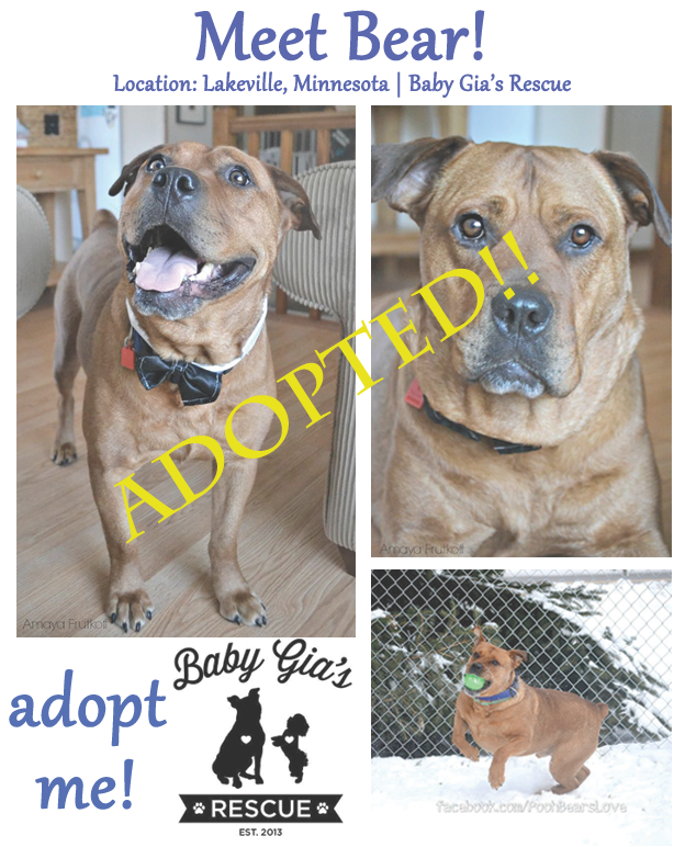 collage-bear-adopted