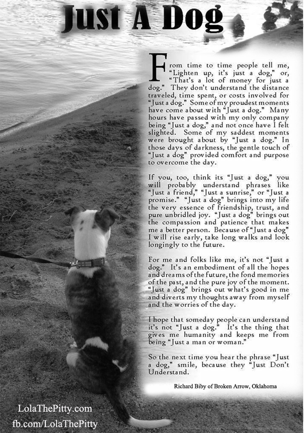Black & White Sunday – 'Just a Dog' | Lola the Pitty