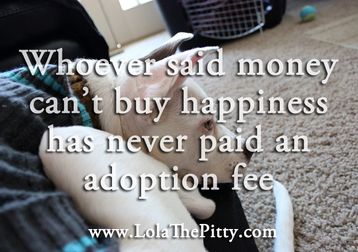Whoever said money can't buy happiness has never paid an adoption fee. www.lolathepitty.com