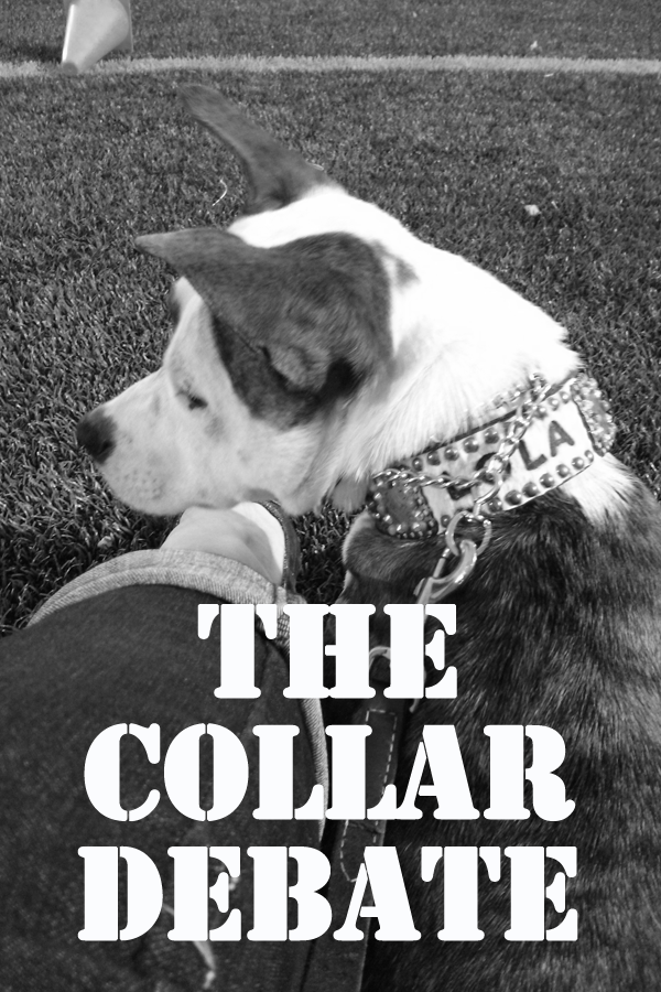 The Collar Debate - prong, martingale, harness...what's right!? www.lolathepitty.com