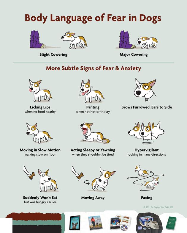 Poster Via Dr. Sophia Yin