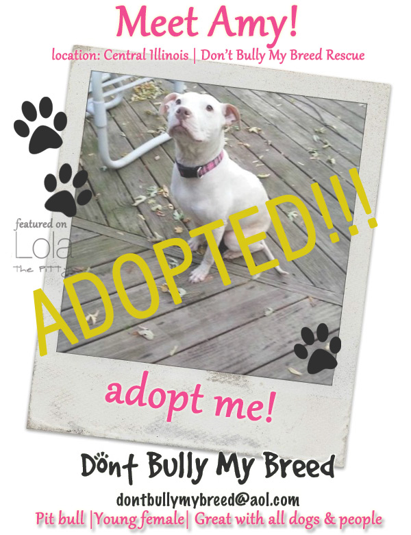 Amy - Adoptable Dog of the Week - location: Illinois - lolathepitty.com