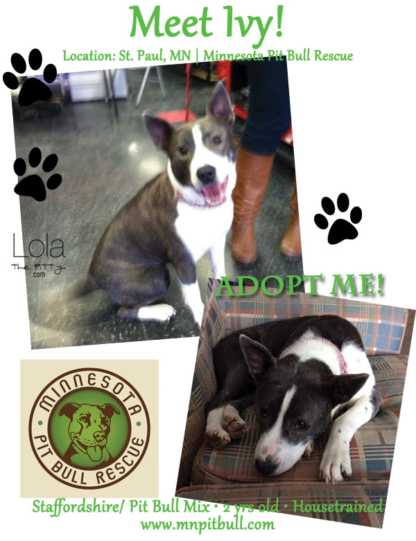collage-ivy-adoptable-dog
