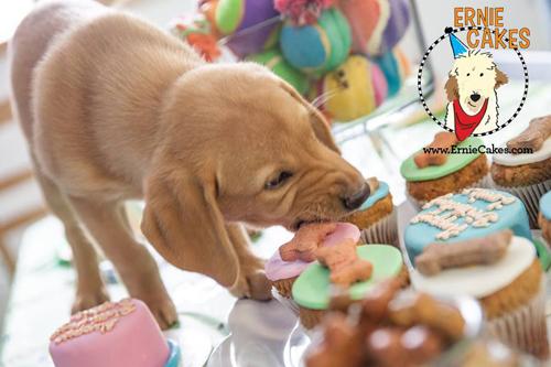 ernie-cakes-puppy2