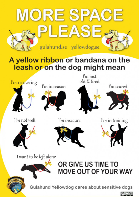 The Yellow Ribbon (used to indicate a dog needing space) - Good Idea or Not?! -lolathepitty.com