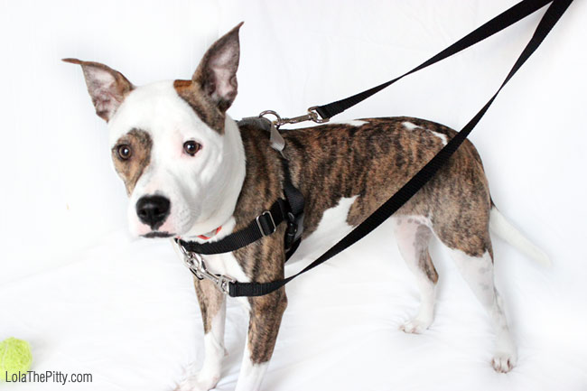 The Freedom No-Pull Harness (by 2 Hounds Design) Review - Via Lolathepitty.com