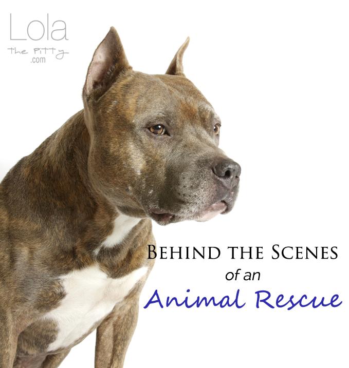 behind-scenes-animal-rescue-lolathepitty