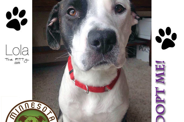Uma - Adoptable Dog of the Week on Lolathepitty.com. | Minnesota Pit Bull Rescue