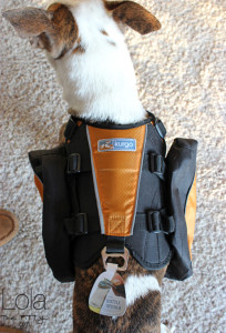 Kurgo Dog Backpack Review - Lolathepitty.com