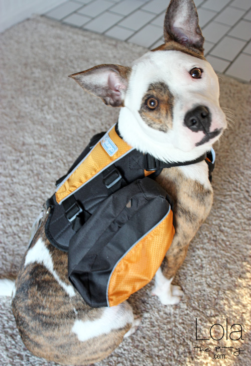Kurgo dog backpack review | lolathepitty.com
