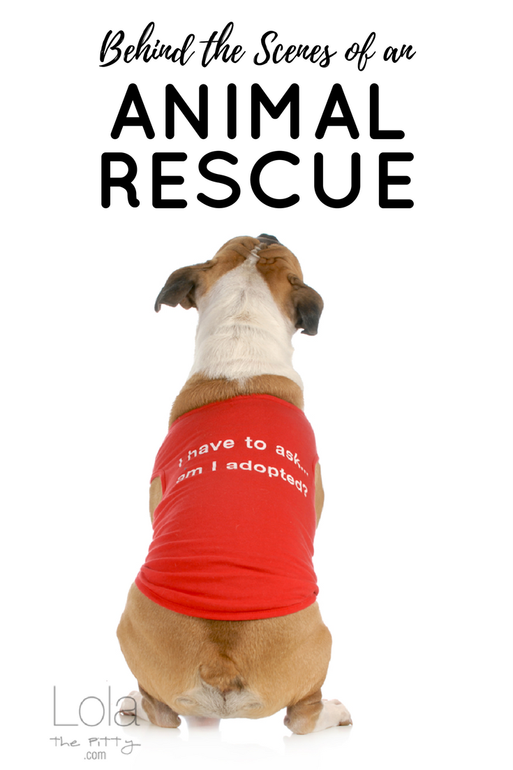 Behind the Scenes of Animal Rescue - common questions & answers - @lolathepitty