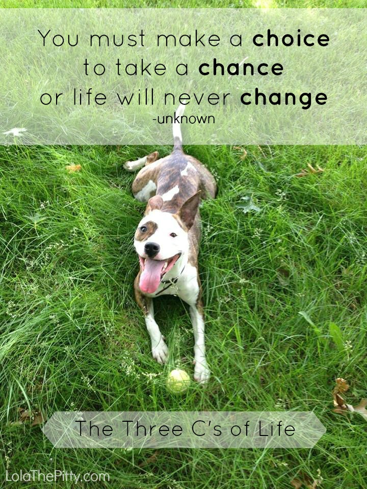 The 3 C's of Life - lolathepitty.com
