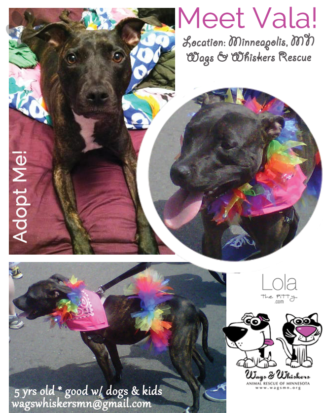 adoptable-dog-of-week-vala-lolathepitty