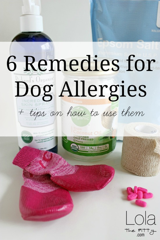 6 Remedies for Dog Allergies and how to use them - lolathepitty.com