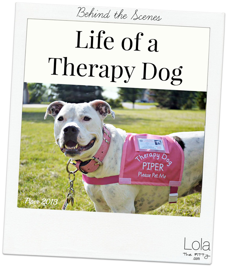 All About Therapy Dogs - Common Questions & Answers. @lolathepitty