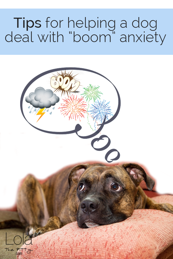 Thunder Days & Boomie Nights - Tips for helping a dog deal with firework and storm anxiety - @lolathepitty