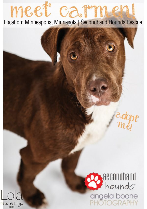 Meet Carmen! Adoptable Dog of the Week - lolathepitty.com