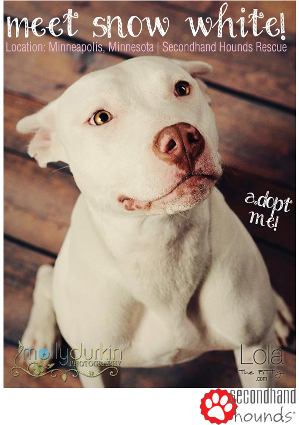 Snow White - adoptable dog of the week featured on lolathepitty.com