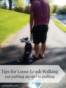 Tips to Stop Leash Pulling!
