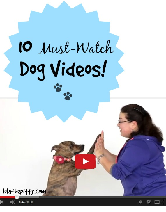 10 Must-Watch Dog Videos on lolathepitty.com