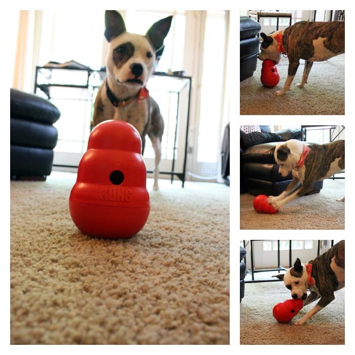 Lola's Top 5 Favorite Dog Toys