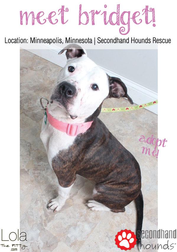 Meet Bridget: Adoptable Dog of the Week on Lolathepitty.com