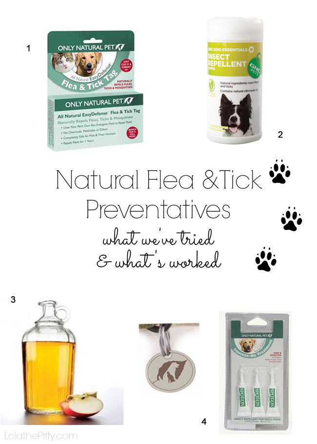 Natural Flea & Tick Preventatives: What We've Tried & What Works! Lolathepitty.com