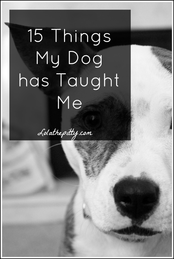 15 Things My Dog (a pit bull) has Taught Me - lolathepitty.com