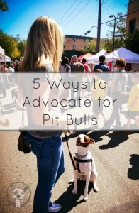 Five Ways to Advocate for Pit Bulls - lolathepitty.com