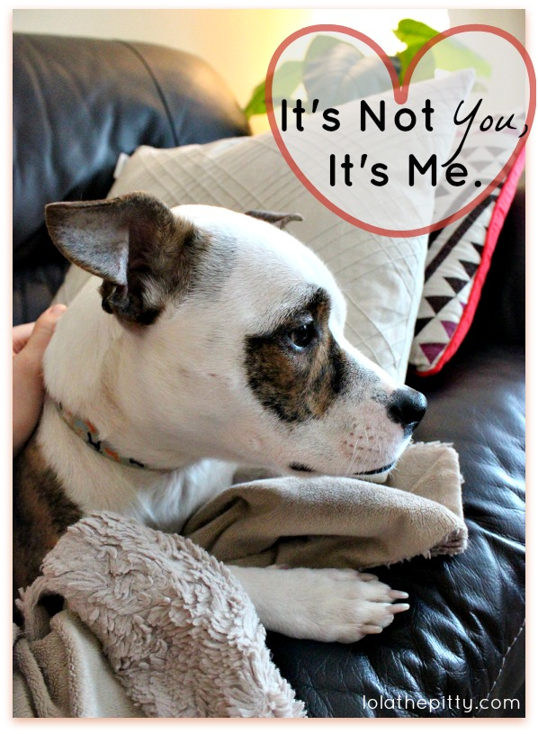 It's Not You, It's Me...dog training obstacles - a learning experience. Via lolathepitty.com