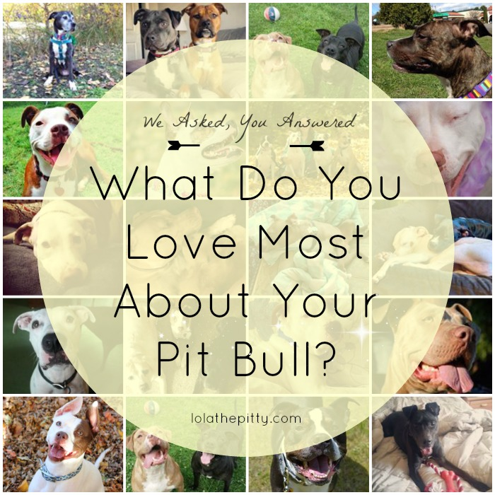 "We asked our fans - ""What Do You Love Most About YOUR Pit Bull"" - here's what they said. lolathepitty.com"