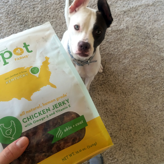Lola the Pitty's Holiday Gift Guide for Dog Lovers - Spot Farms Treats