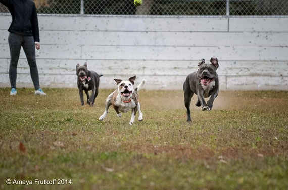 Play date! Lolathepitty.com