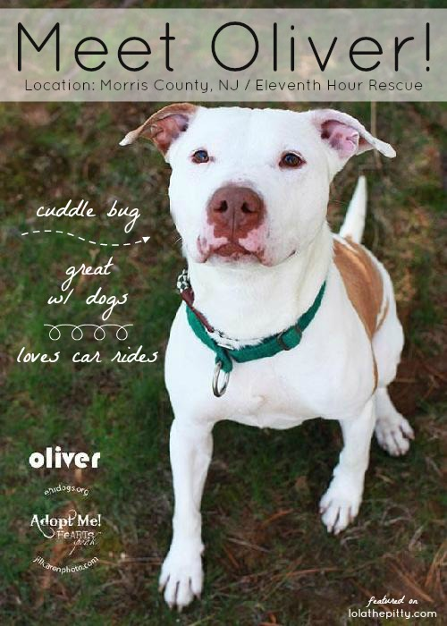 Meet Oliver! Adoptable dog from NJ  - w/ Eleventh Hour Rescue.