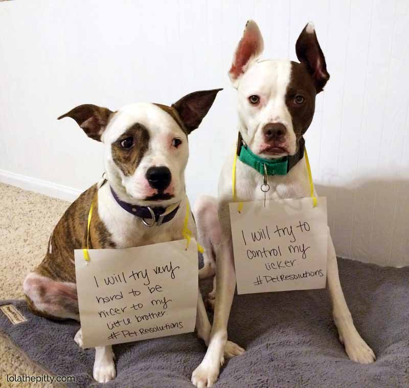 #PetResolutions from Lolathepitty.com