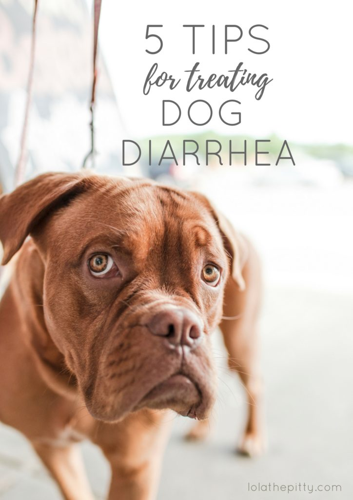 5 Tips for Treating Dog Diarrhea - lolathepitty.com