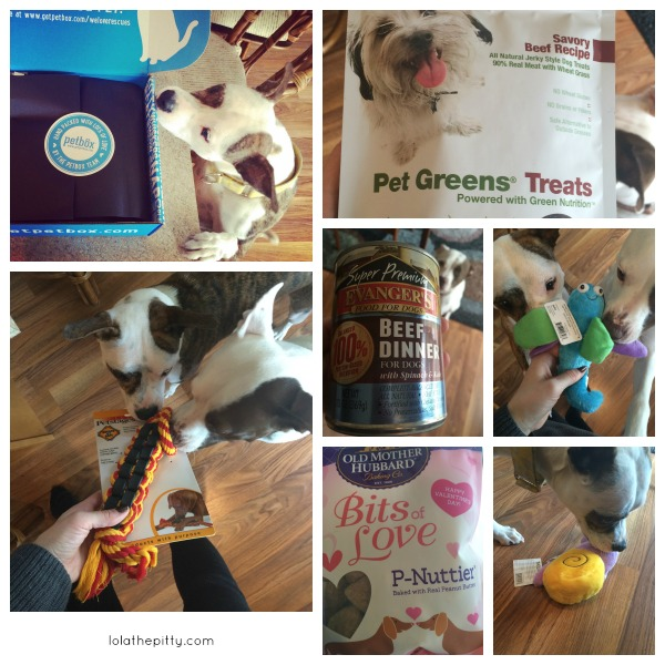 My Pittied Life: February | PetBox Review! | lolathepitty.com