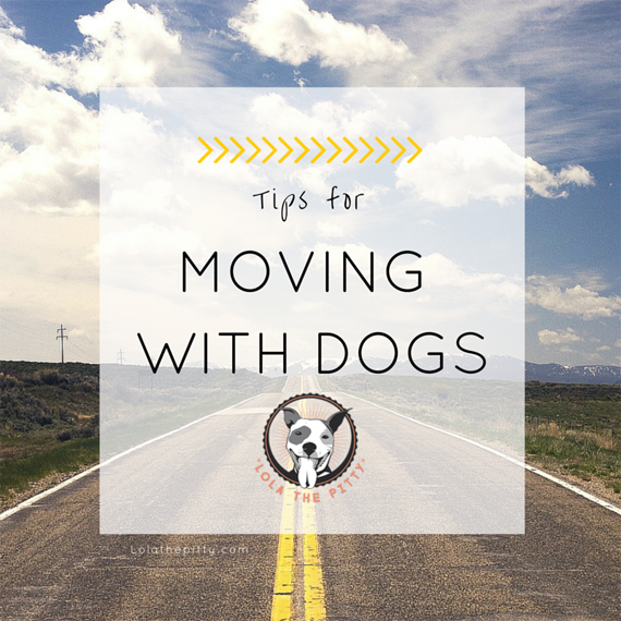 4 Tips for Moving With Dogs | Lolathepitty.com