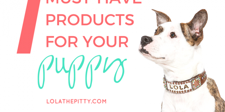 7 Must-Have Products for Your Puppy