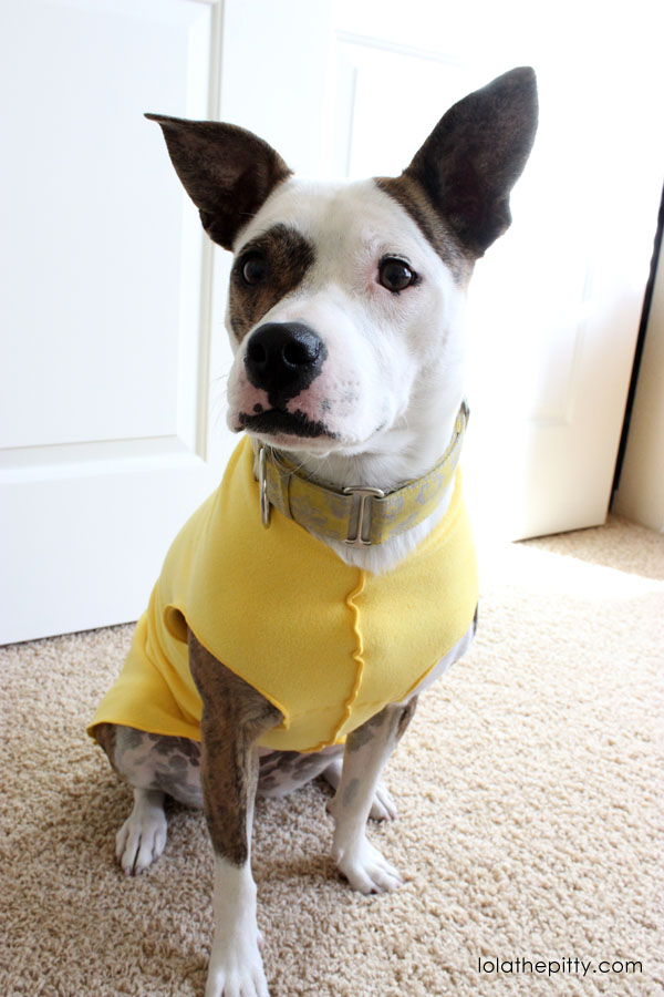 Gold Paw Fleece Jacket Review | Lolathepitty.com